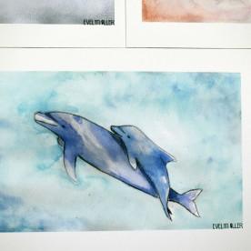 delfín (2)