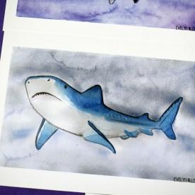 tiburón (2)